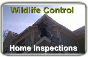 Wildlife Inspections
