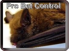 Pro Bat Control