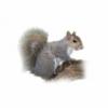 Squirrel Control