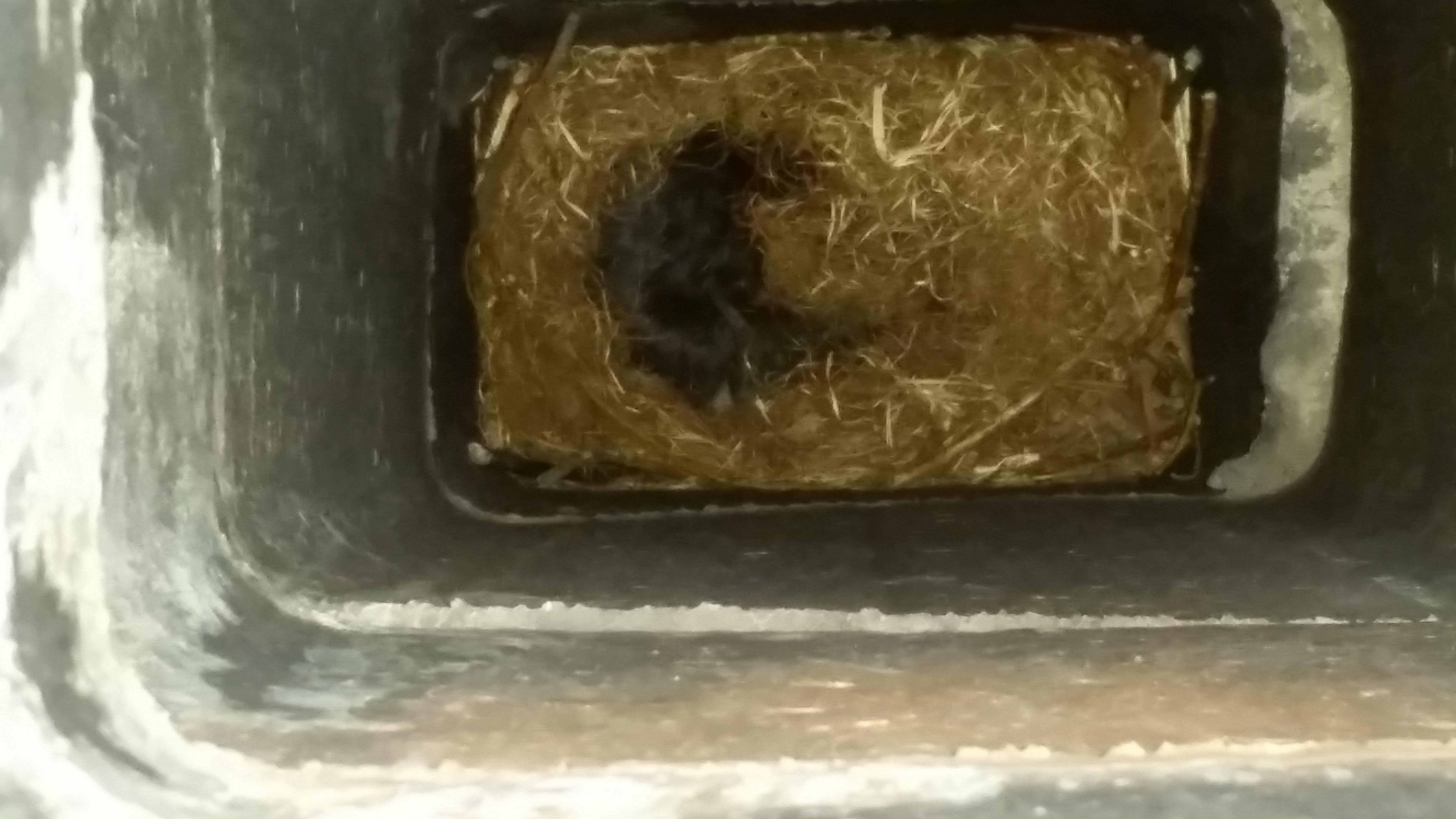 Squirrel Removal Control Birmingham Mi Michigan Bat Control Inc