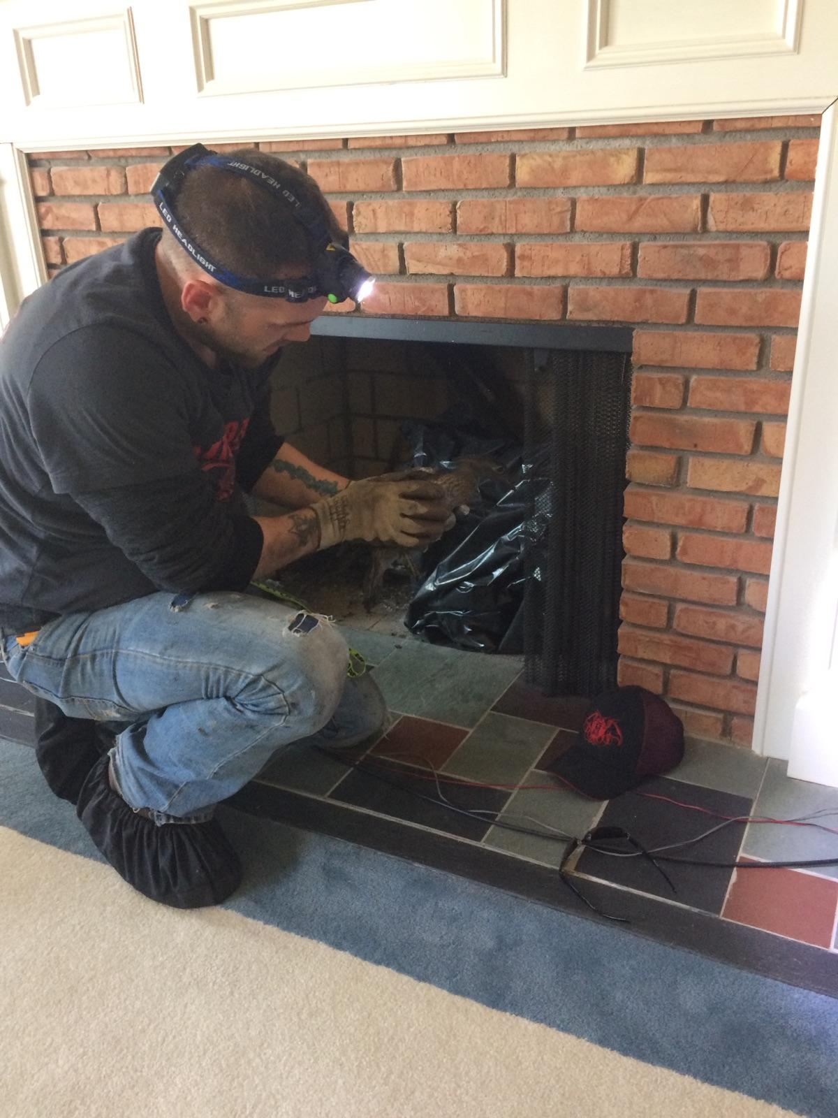 Duck In A Fireplace Lake Orion Mi Michigan Bat Control Wildlife Solutions