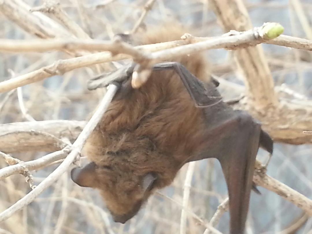 Bat Haning on a Tree