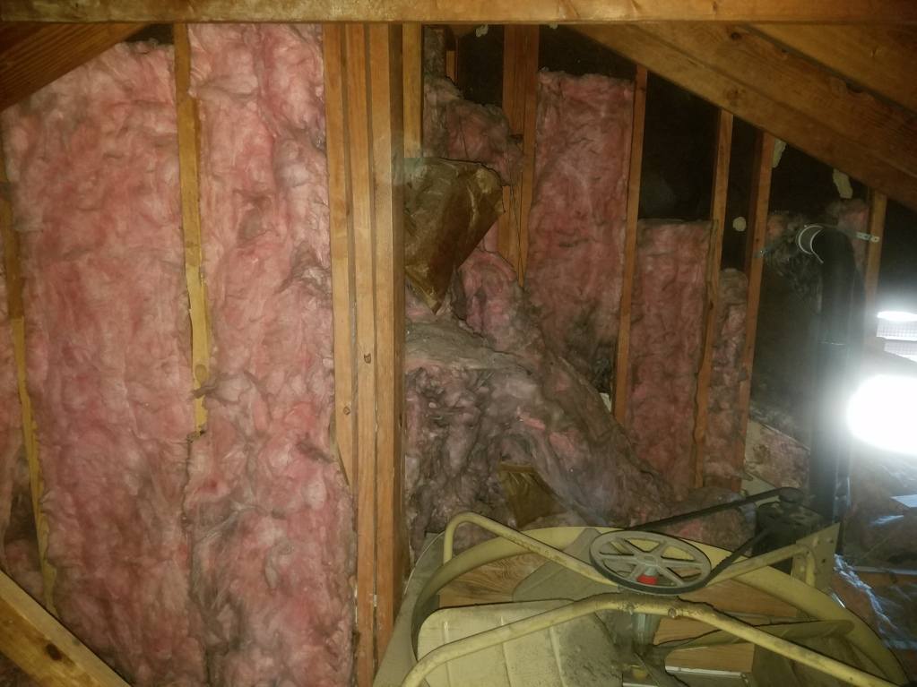 Raccoons tore down insulation from the wall.